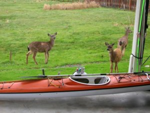 """Quick! You grab the kayak. I'll get the skis. We're out of here!""""Ah, dude, I think we might have a few problems with your plan."""