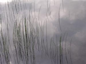 Grass Mirrors Sky - Fine Art America
