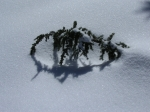 Winter Resilience - from Twelve Months at Lake Valhalla