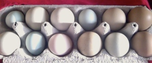 Local unconventionally traditional eggs - not sorted by size or color