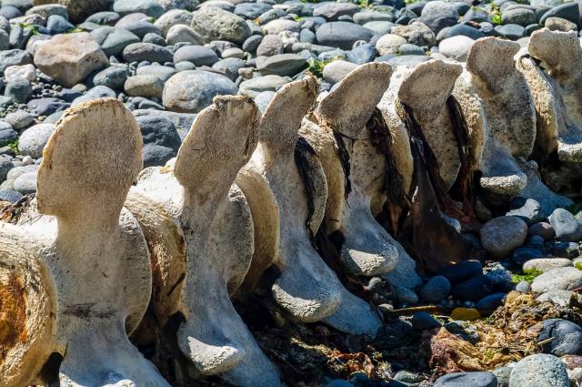 0114_Whale Backbone